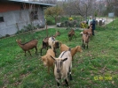 5 muznih koza