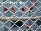 Odgajivacnica papagaja Sunajko