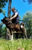 Američka Akita, rezervacija štenaca