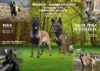 Belgijski ovčar MALINOA Odgajivacnica