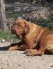 BORDOSKE DOGE - rezervacije stenadi