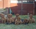 BORDOSKE DOGE stenci na prodaju