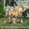 Bulterijer štene na prodaju