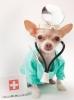 Dežurna Veterinarska ambulanta Caninus medic Beograd Voždova