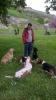 Dresura pasa i obuka- edukacija vlasnika Dogtech