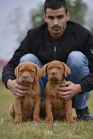Dva muzjaka BORDOSKE DOGE