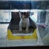 hitno poklon mace umiljato