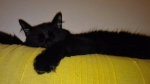 Izgubljen crni veliki macak