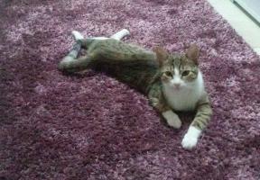 Izgubljena maca