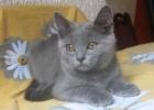 Kartuzijski macici