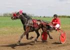 Konji na prodaju