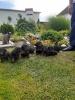 Kratkodlaki jazavicar taxsini