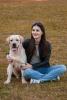 Labrador retriever, kvalitetno leglo zute boje
