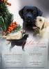 Labrador retriver - sampionskog porekla