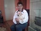 Labrador štenci, šampionskog porekla