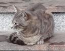 Mačak Marko hitno traži dom!