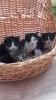 Mačići hitno traže dom!