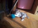Mala maca na poklon