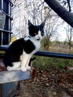 Mlada muška maca traži dom!