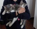 Poklanjam macice