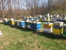 Na prodaju pčelinja društva i rojevi u LR i DB košnicama