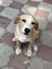 Nestao pas u Nisu