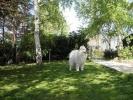 Pansion ROYAL - lux smestaj za pse