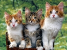 Pansion za mačke Veterinar Beograd