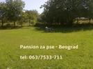 Pansion za pse Beograd (Jajinci)