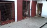 Pansion za pse, Beograd