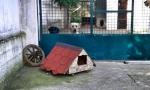 Pansion za pse