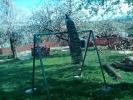 Paunovi