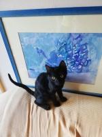Poklanjam crne macice