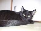 Poklanjam Crnu macu
