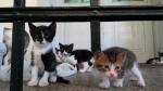 Poklanjam NAJsladje male macice !