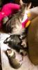 Poklanjam preslatke macice