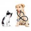 Posao- veterinar u veterinarskoj apoteci