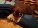 Preslatko štene traži dom!