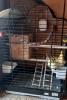 Prodajem dve NIMFE sa kavezom