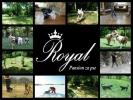 ROYAL - pansion za pse Beograd