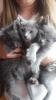 Ruski plavi macici