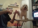 Sisanje pasa i macaka i strucni saveti veterinara