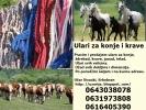 Ulari za konje i krave
