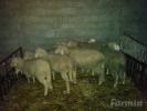 Virtemberg ovnici