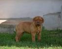 Zenkica BORDOSKE DOGE